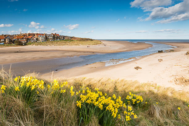 Alnmouth beach in spring Alnmouth beach with spring daffodills as the River Aln meets the sea northeastern england stock pictures, royalty-free photos & images