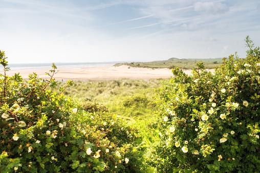Alnmouth Beach, Northumberland UK