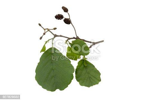 Herbarium series.