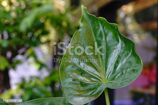 Thailand, Plant, Autumn, Drop, Living Organism, Natural Phenomenon