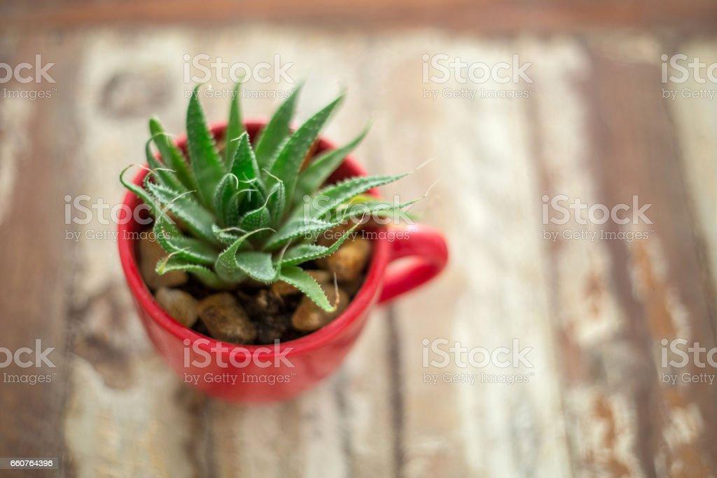 Aloe e vera stock photo