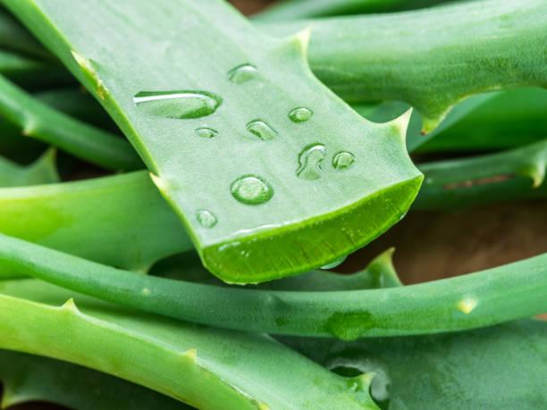 Feuilles fraîches aloès ou l'Aloe vera et tranches. - Photo