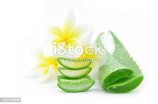istock Aloe vera and plumeria. 642235656