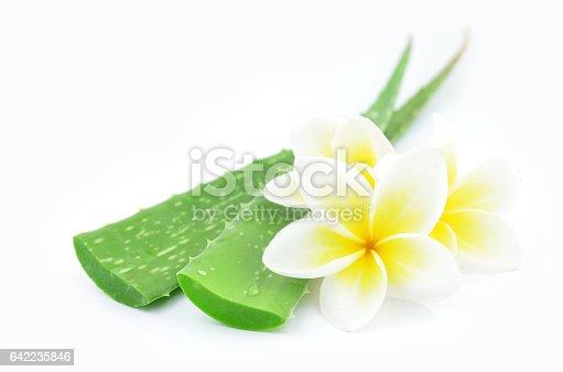 istock Aloe vera and plumeria. 642235846