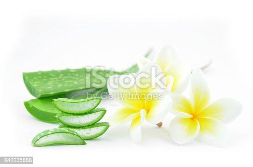 istock Aloe vera and plumeria. 642235886