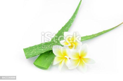 istock Aloe vera and plumeria. 642235898