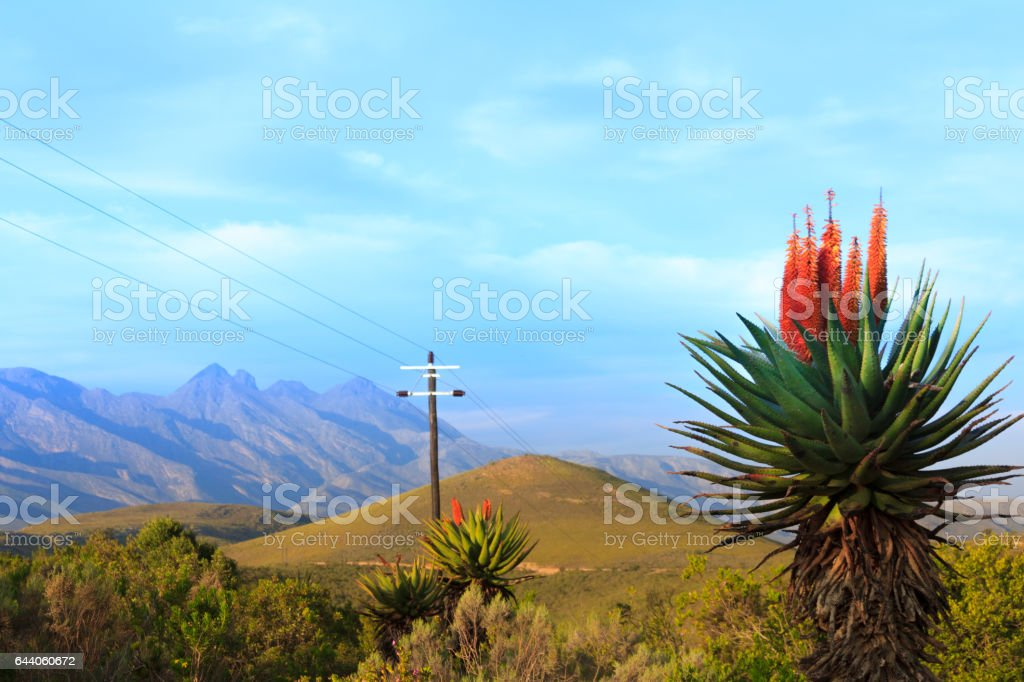 Aloe Vera and power lines on top of the Antonies mountain with Cock's comb in the background stock photo