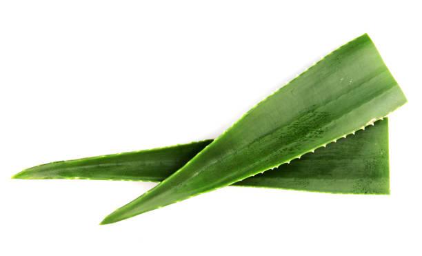 Aloe Vera Isolated On White Aloe Vera On White Background aloe stock pictures, royalty-free photos & images