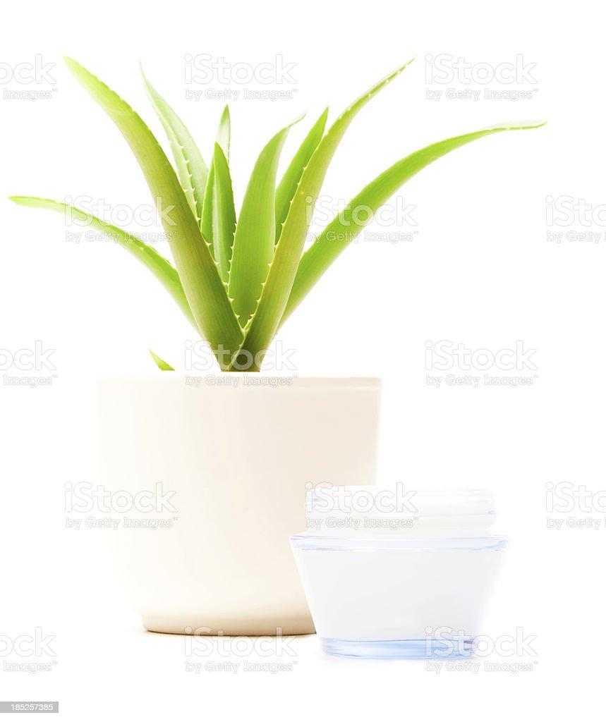 aloe vera moisturizer royalty-free stock photo