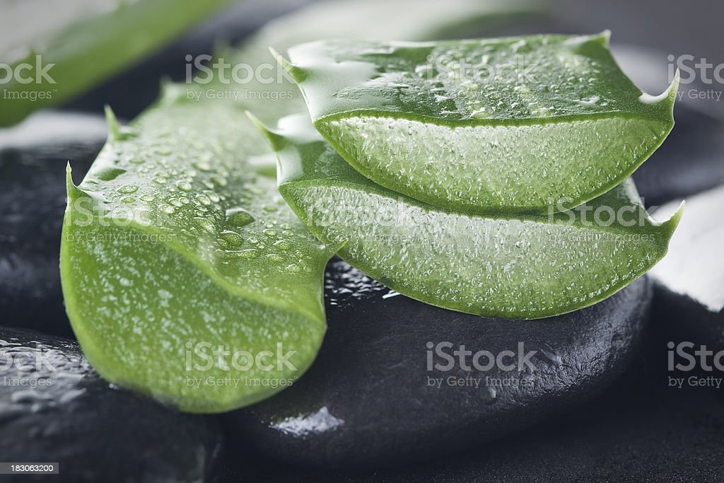 Aloe vera on dark background stock photo