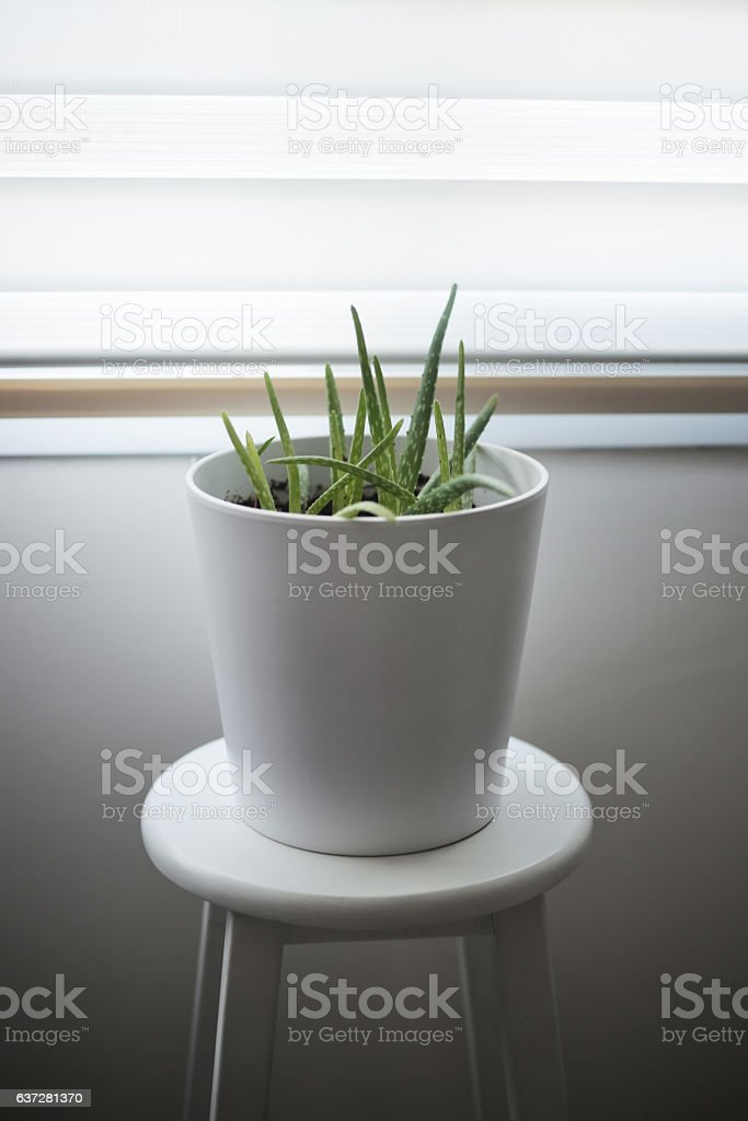 Aloe vera on the stool stock photo