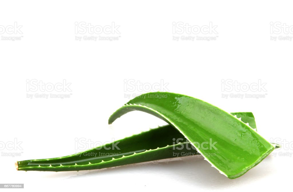 Aloe Vera On White stock photo
