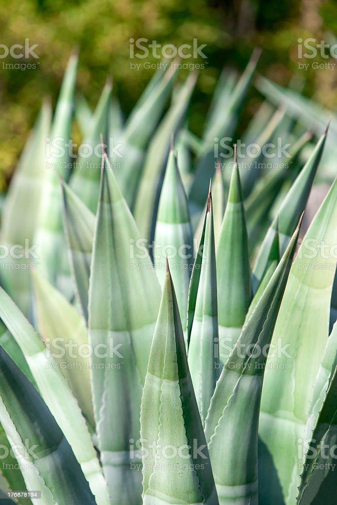 L'Aloe Vera - Photo