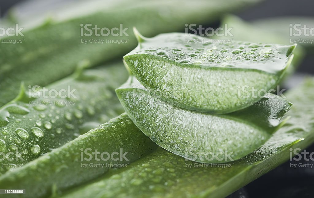 Aloe vera stock photo