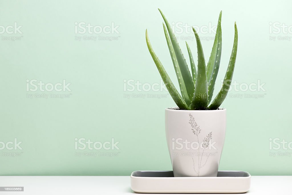 Aloe Vera - foto stock