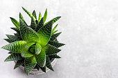 istock Aloe vera plant on a concrerete background. 1202116509