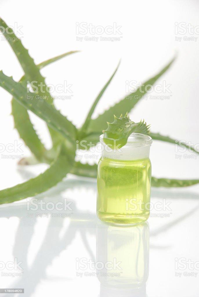 aloe vera plant with tubes stock photo