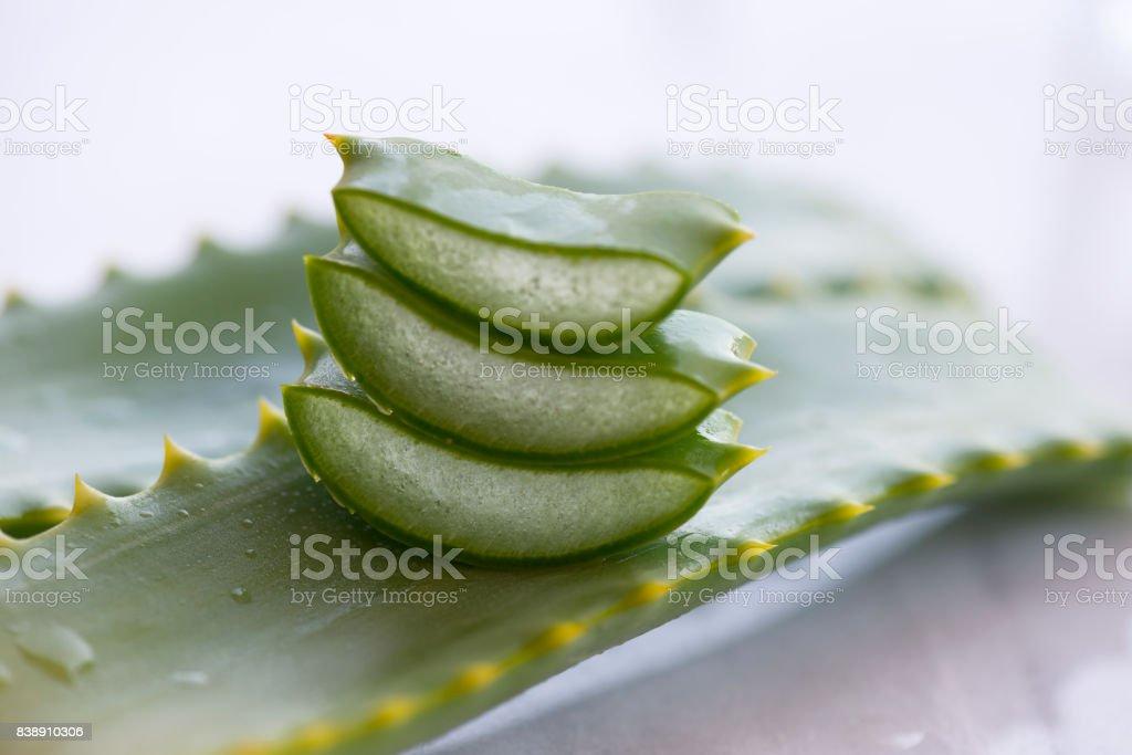 Aloe Vera Slices stock photo