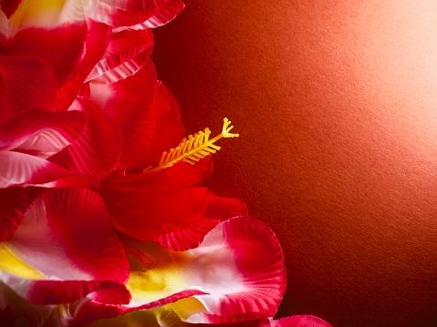 Aloha red