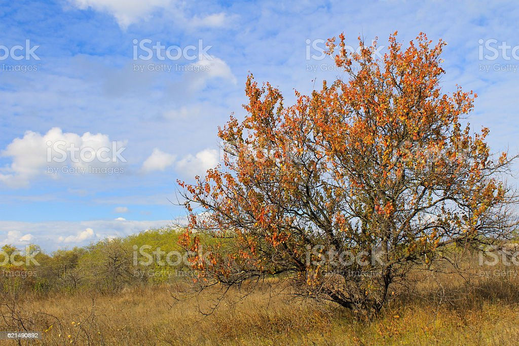 Alone apricot tree against blue sky on autumn Lizenzfreies stock-foto