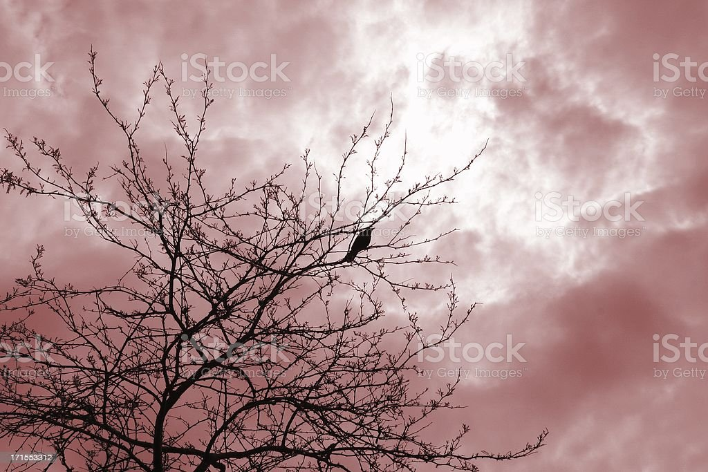 Alone: Crow  And Poetic Sky royalty-free stock photo