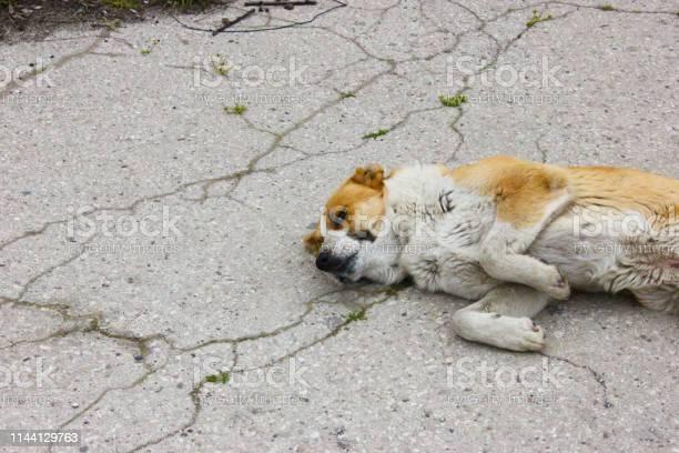 Alone dog sleep in the street picture id1144129763?b=1&k=6&m=1144129763&s=612x612&h=9q8gb8ckwg4xydqbizrpcpjjmqf7qpmh n3e9sdhgtk=