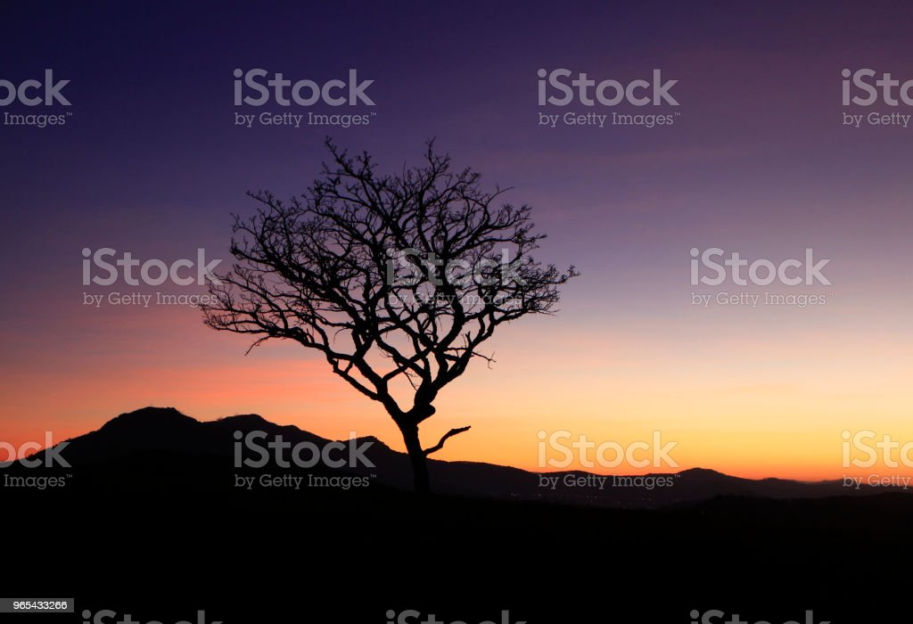 Alone dry tree on mountain royalty-free stock photo