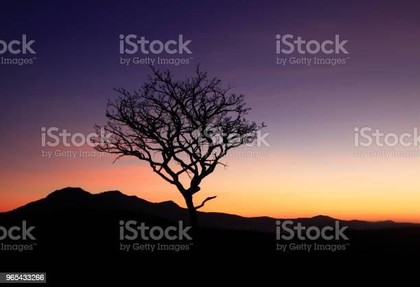 Samo Suche Drzewo Na Górze - zdjęcia stockowe i więcej obrazów Architektura
