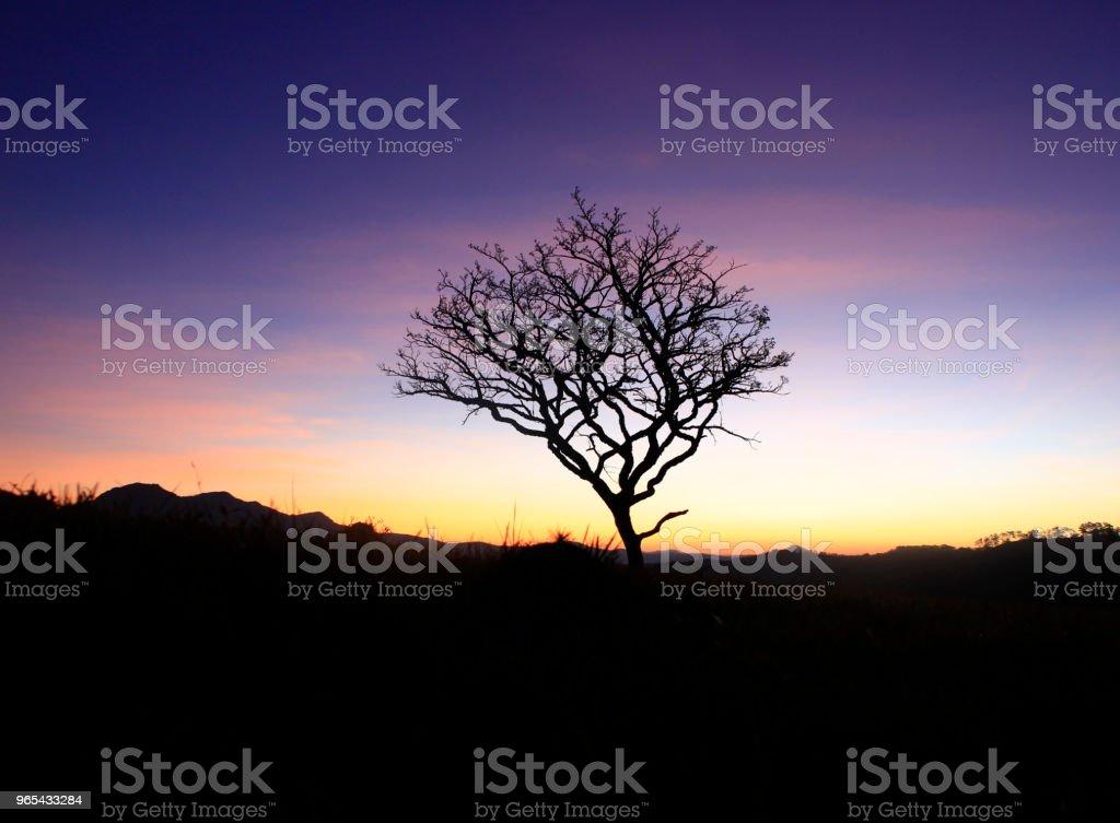 山上獨幹樹 - 免版稅乾旱氣候圖庫照片