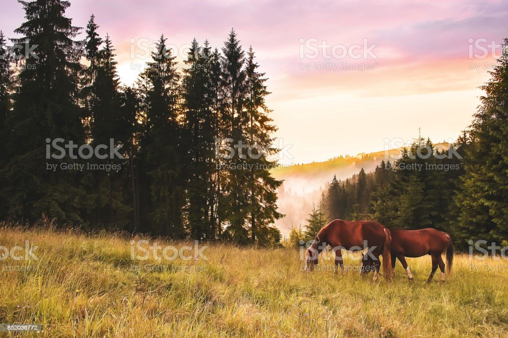 Alone horse at mountain meadow at rainy day with dramatic clouds. Rural landscape stock photo