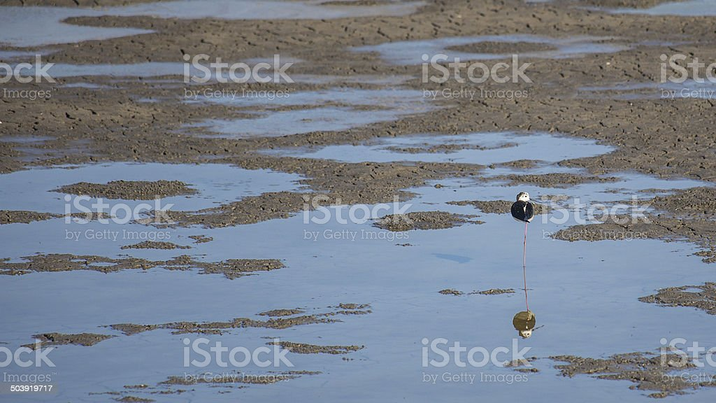 alone in a dry saline. stock photo