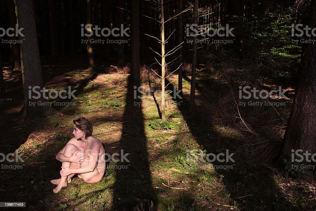 alone in the forest royalty-free stock photo