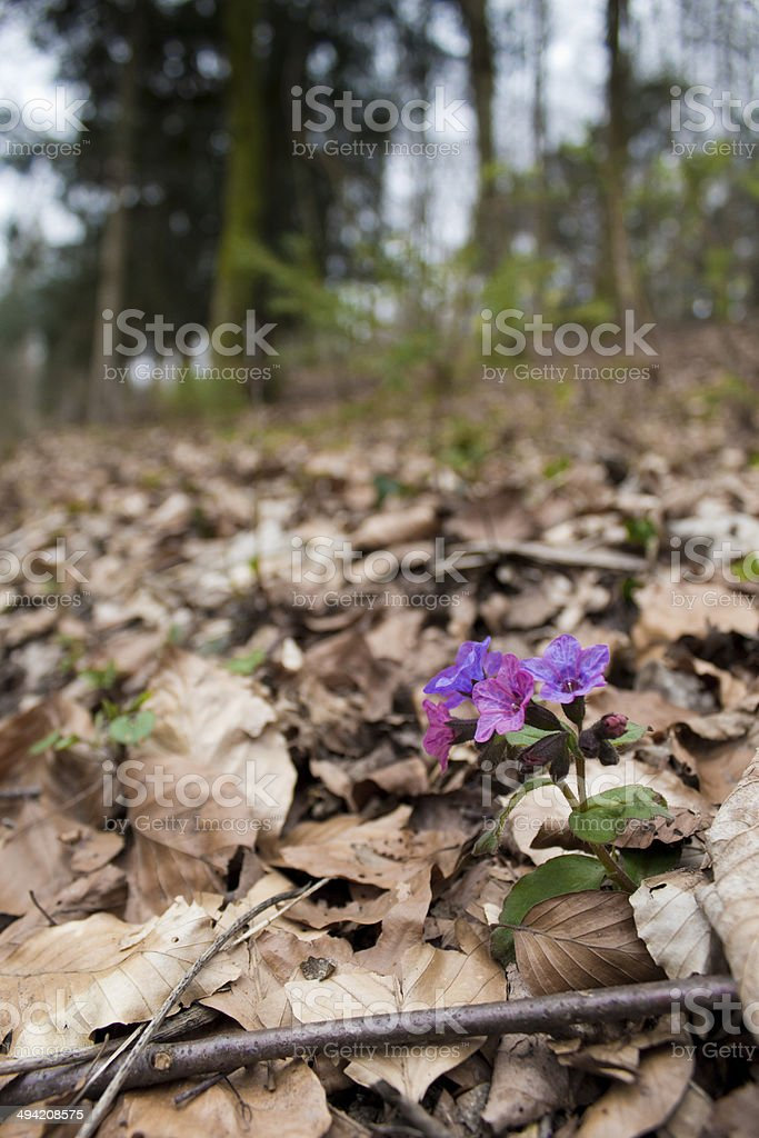 Alone in the Wood stock photo