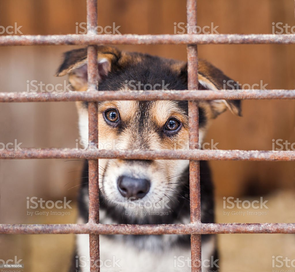 Alone puppy dog locked in the cage stock photo