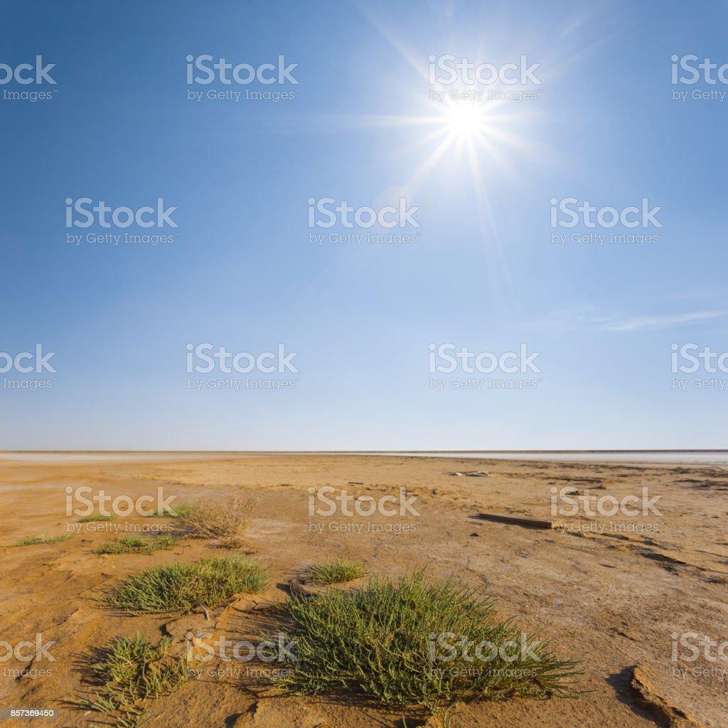 alone small green bush on a sand under a sparkle sun stock photo