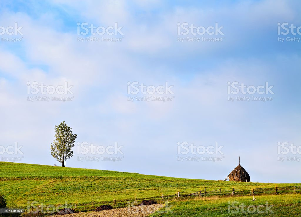 Alone tree and haystack on the green hill stock photo