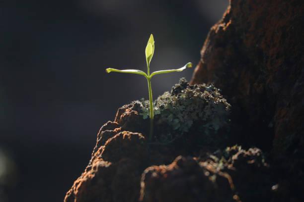 Allein Baum wuchs in rock – Foto
