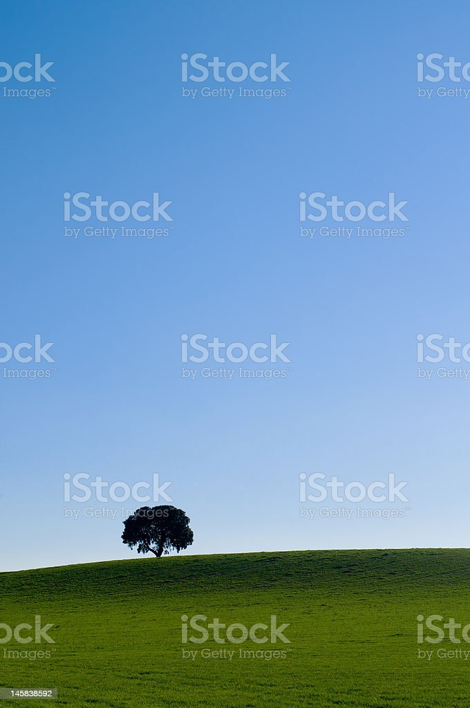 Alone tree in a green meadow under blue sky royalty-free stock photo