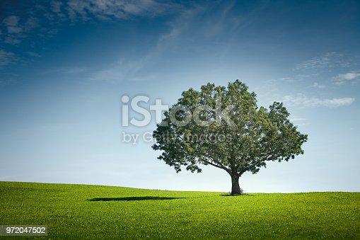 Summer landscape, shadow on grass