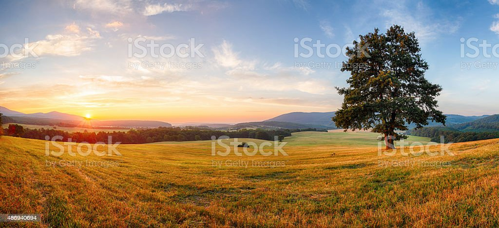 Alone tree on meadow at sunset with sun - panorama stock photo