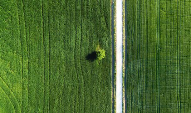 allein baum auf dem feld und straße. agrarlandschaft aus luft - aerial overview soil stock-fotos und bilder