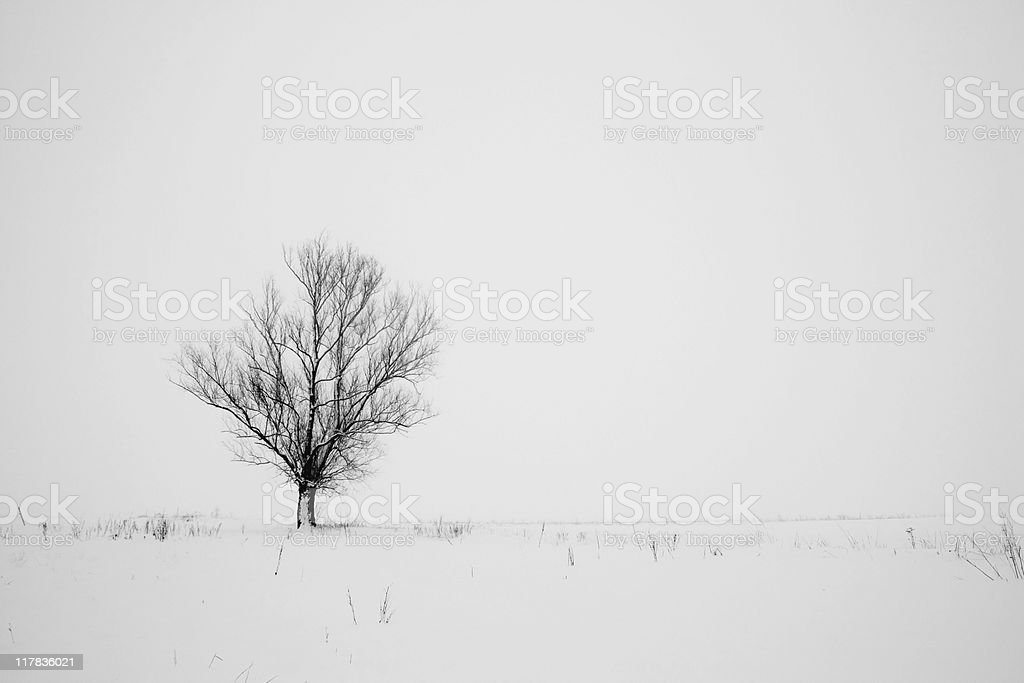 Alone tree royalty-free stock photo