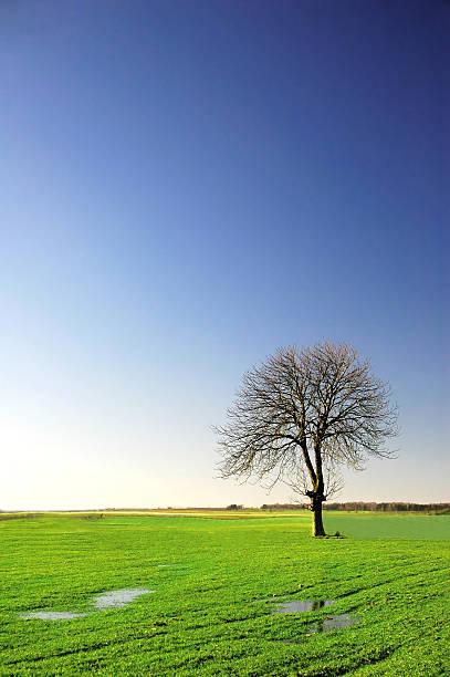 Allein Baum – Foto