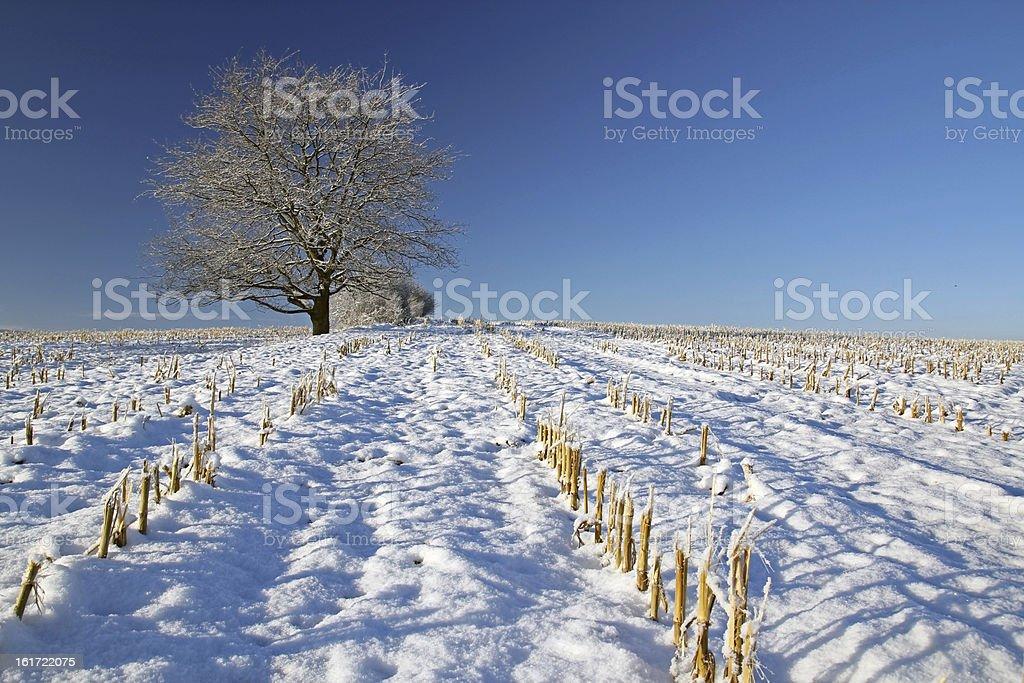 Alone tree royalty-free stock photo