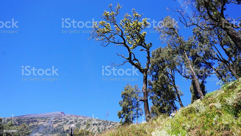 Solo albero foto stock royalty-free
