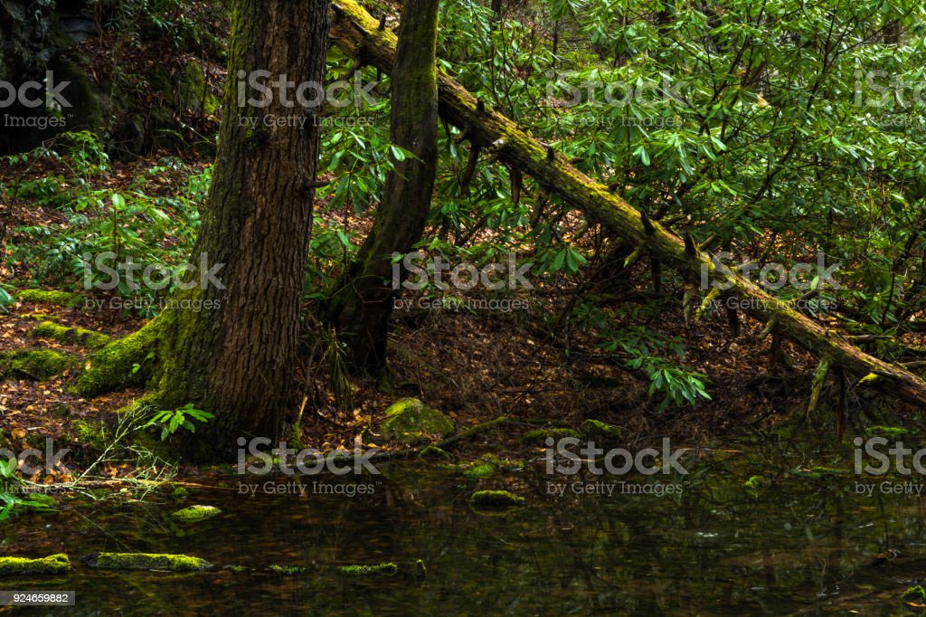 Along the Forests Edge stock photo