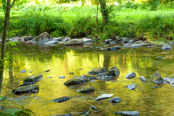 Along the river Barle in Tarr Steps Woodland stock photo