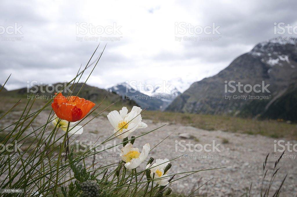 Alp Languard – Foto