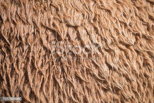 Alpaca fur Closed up