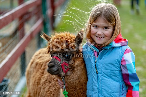 alpaca with a girl in a home zoo